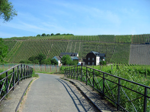Cycling the vineyards of the Moselle River